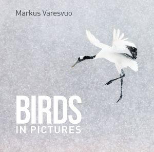 Birds In Pictures